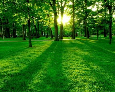 yeşil_436532